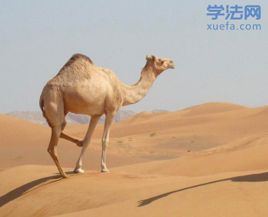 我翻唱的《沙漠骆驼》法考版