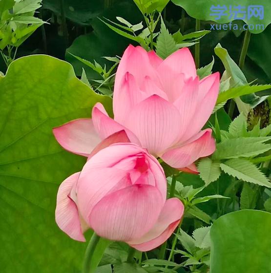 一朵花.png