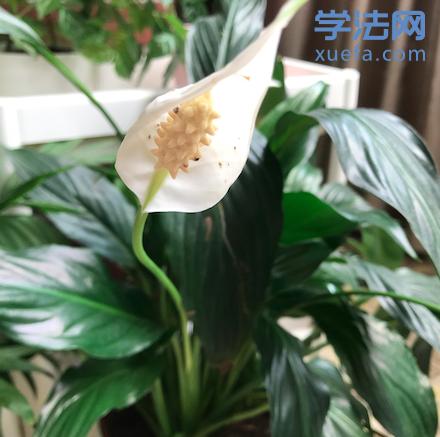 民法2019最后一次测试结束,刘红利考了147分